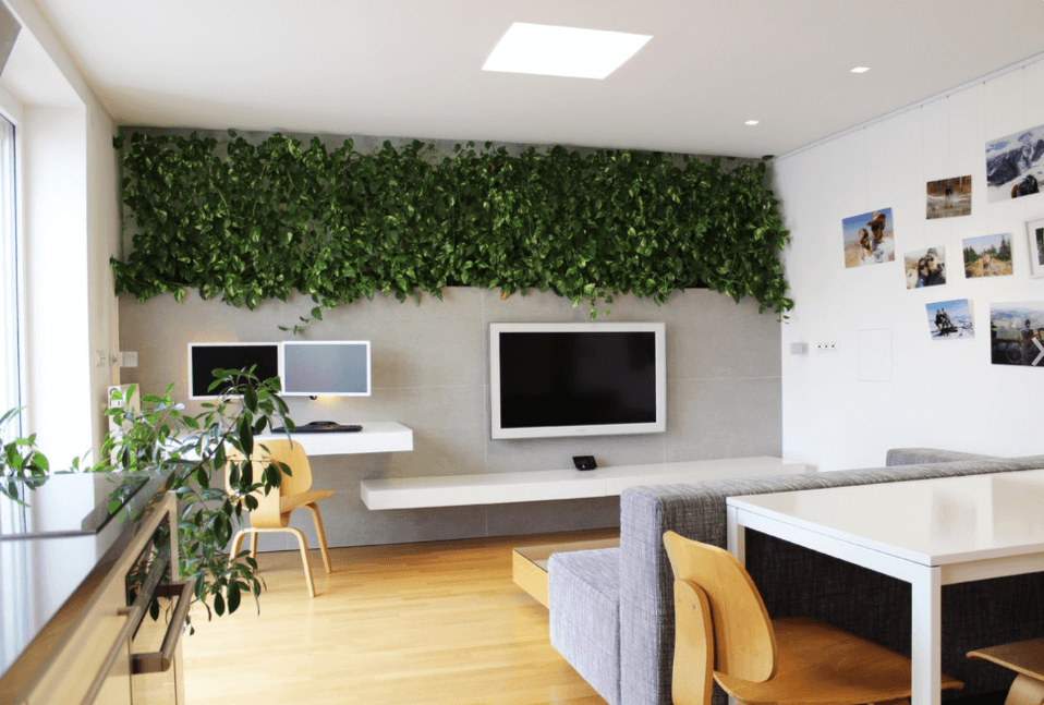 Decorating Your Apartment Magnificent All About Decorating Your Apartment With Plants Inspiration Design